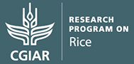 RICE: CGIAR Research Program on Rice Agri-Food Systems